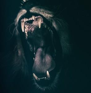 lion-2885618_640
