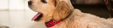 puppies-1871263_640