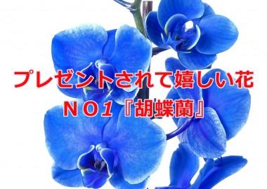 phalaenopsis-1858681_1920