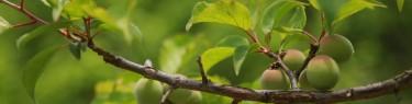 nature-3297418_1920