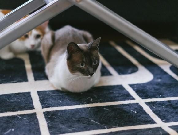 cat9302340_TP_V4